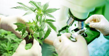 Recreational Marijuana Orange County