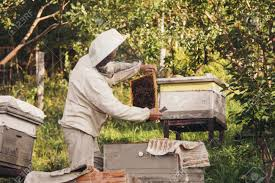 Best Bee Hive Suppliers