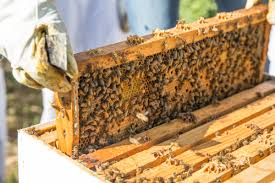 Bee Hive Suppliers