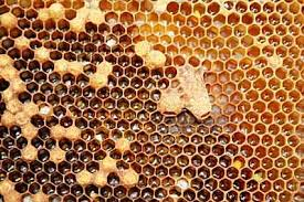 Bee Hive Manufacturer