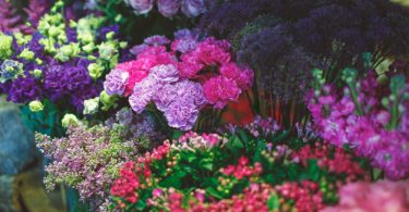 Some Common Myths About Flowers Around The World